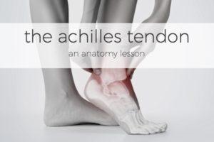 Salvation Wellness Blog Achilles Tendon Anatomy
