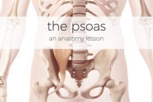 Salvation Wellness Blog Psoas Anatomy