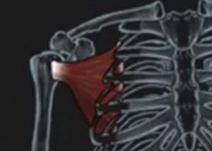 Salvation Wellness Shoulder pain SUBSCAPULARIS