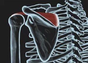 Salvation Wellness Shoulder pain SUPRASPINATUS